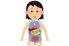 自律神経:内臓の動き
